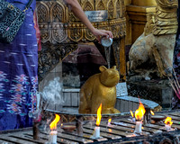 The Guinea Pig at Offerings at Shwedagon Pagoda