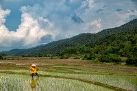 Hmong Villages in Rice Fields