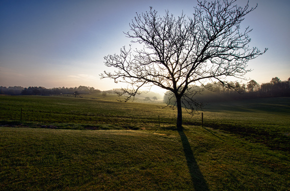 Walnut Tree Sunrise II