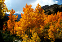 Autumn Falls on Little Cottonwood Canyon - III