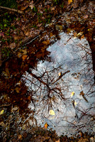 Reflections in the White Cedar Swamp