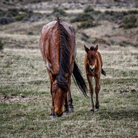 A Colt & Her Mother II