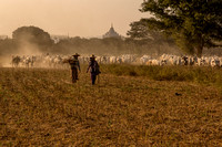 Fields of Bagan