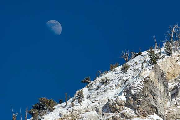 Winter Moon over Alta