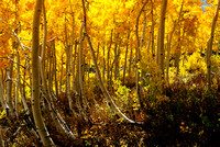 Autumn Falls on Little Cottonwood Canyon - V