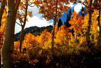 Autumn Falls on Little Cottonwood Canyon - IV
